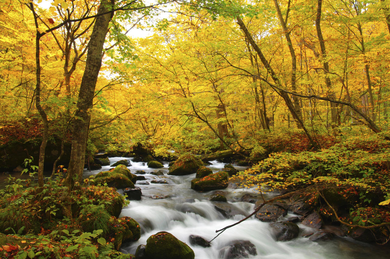 Nature is abundant